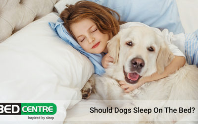 Should Dogs Sleep On The Bed